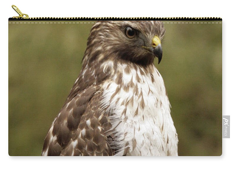 Bird Carry-all Pouch featuring the photograph Dark Beauty by Phill Doherty