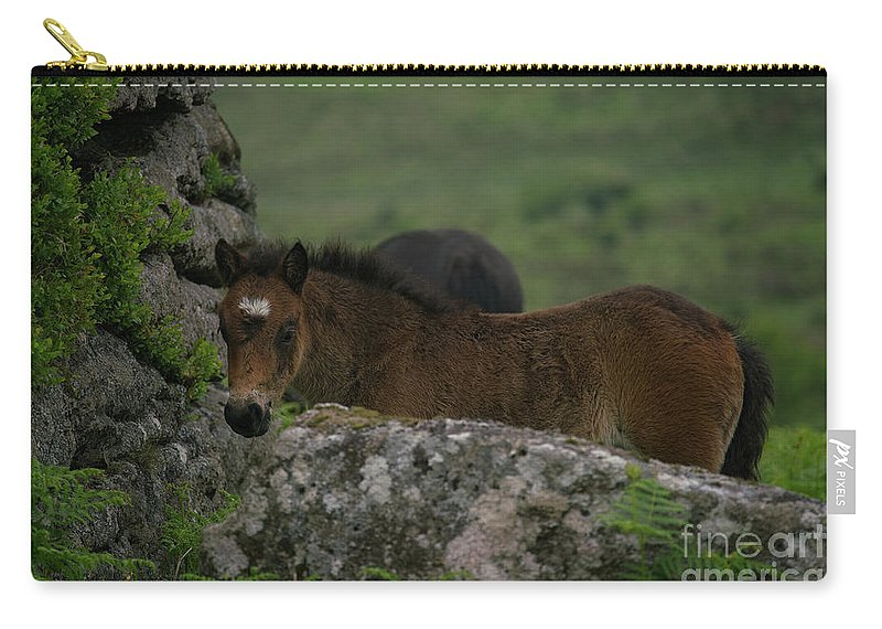 Baby Horse Carry-all Pouch featuring the photograph Dartmoor Foal by Rawshutterbug