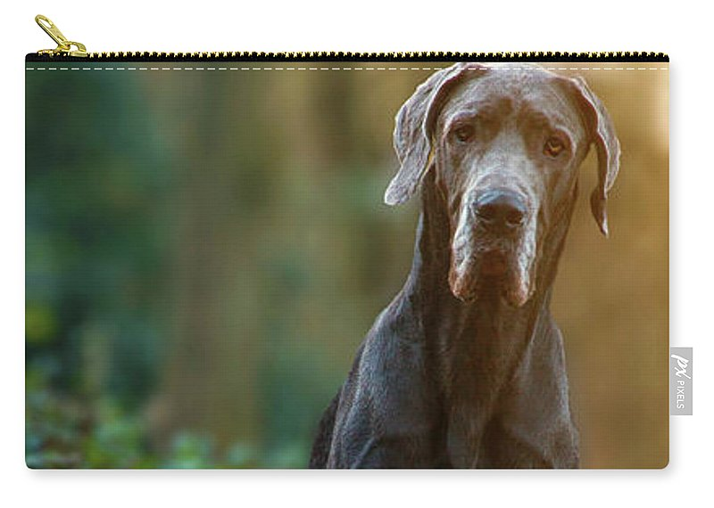 Great Dane Carry-all Pouch featuring the photograph Darwin by Angela Edwards-Warburton