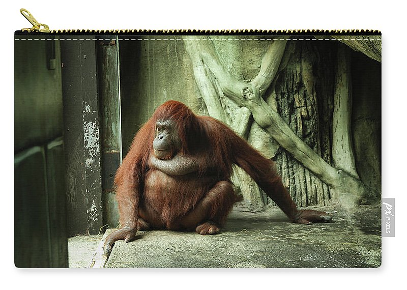 Orangutan Carry-all Pouch featuring the photograph Daydreaming Dasa by Ron Vollentine