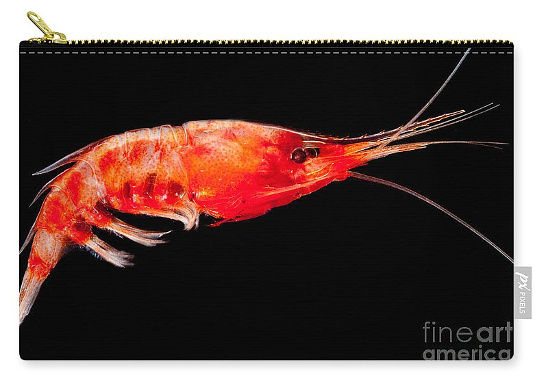 Mesopelagic Carry-all Pouch featuring the photograph Deep Sea Shrimp by Dant� Fenolio