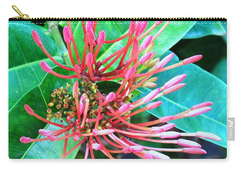Flower Carry-all Pouch featuring the photograph Delicate Pink Flower by Ian MacDonald