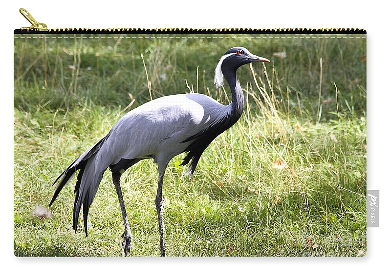 Bird Carry-all Pouch featuring the photograph Demoiselle Crane by Teresa Zieba