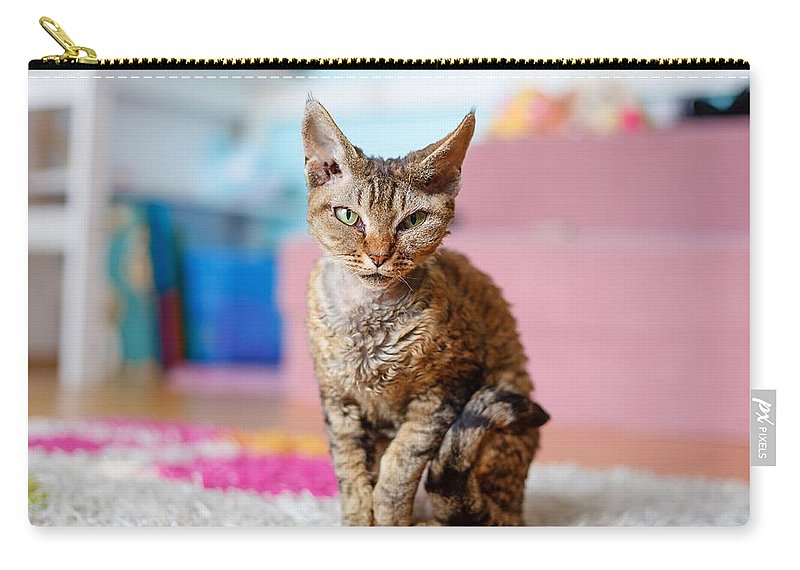 Devon Carry-all Pouch featuring the photograph Devon Rex Purebred Domestic Cat by Lukasz Szczepanski