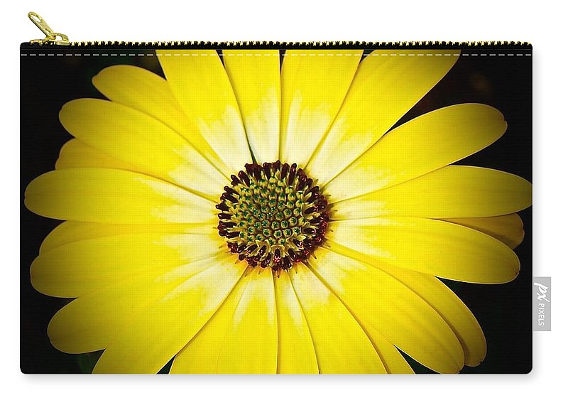 Chicago Botanic Garden Carry-all Pouch featuring the photograph Diasy Burst by Tim G Ross