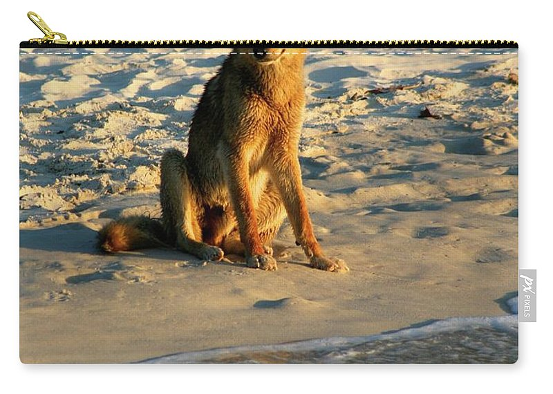 Dingo / Australia / Fraser Island Carry-all Pouch featuring the photograph Dingo On The Beach by Gregory E Dean
