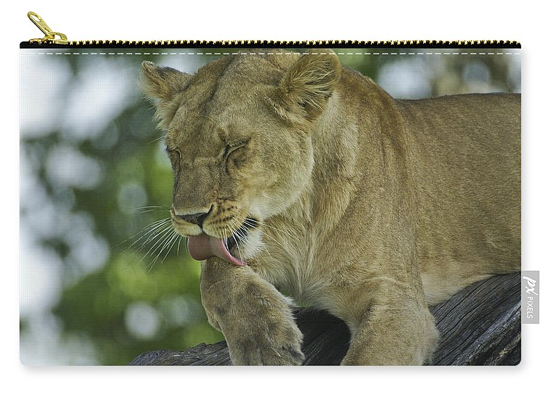Africa Carry-all Pouch featuring the photograph Dirty Paws by Michele Burgess