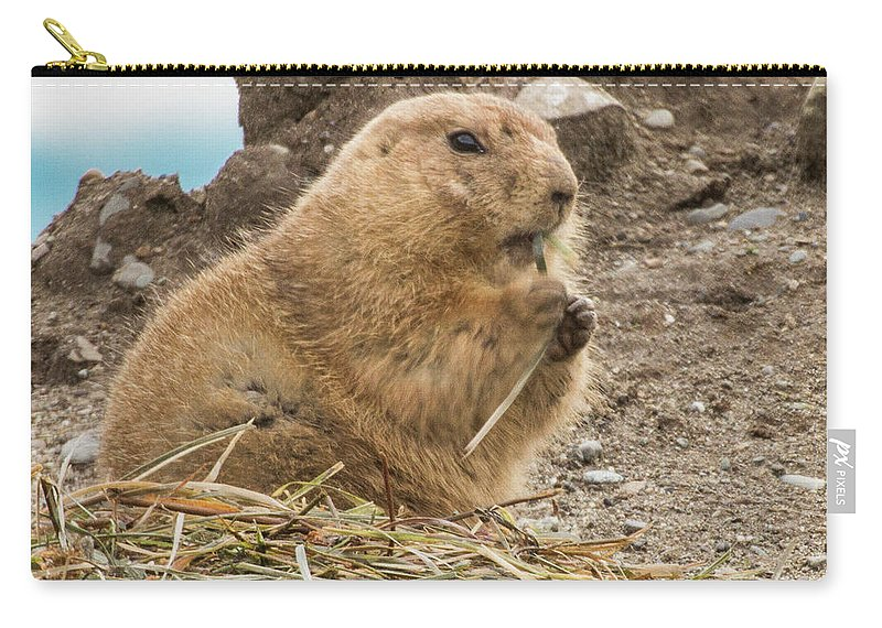 Animals Carry-all Pouch featuring the photograph Discovery Bay-nov-150 by Roger Patterson