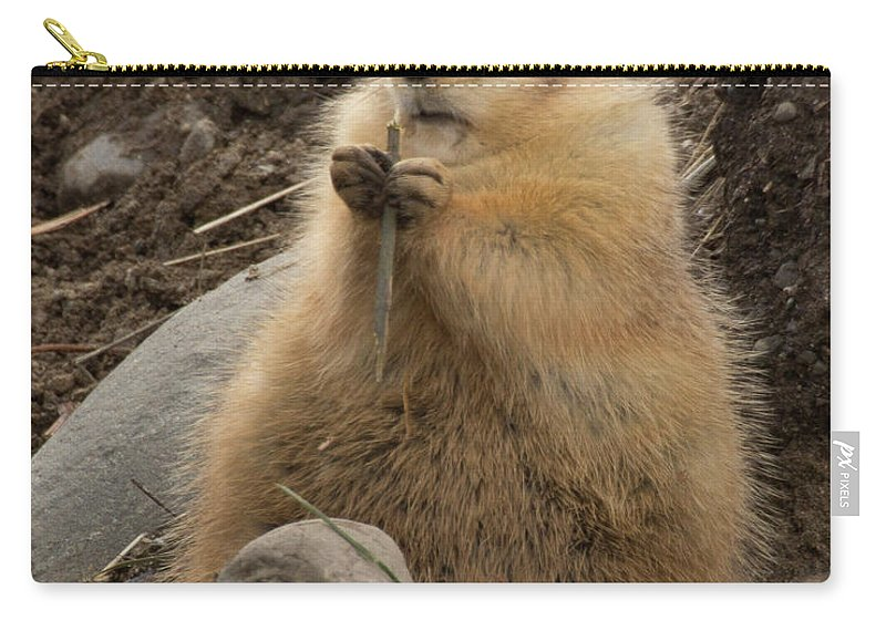 Animals Carry-all Pouch featuring the photograph Discovery Bay-nov-162 by Roger Patterson