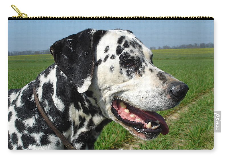 Dog Carry-all Pouch featuring the photograph Dodgy The Dalmation by Susan Baker