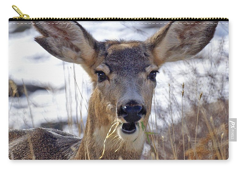 Doe Carry-all Pouch featuring the photograph Doe by Heather Coen