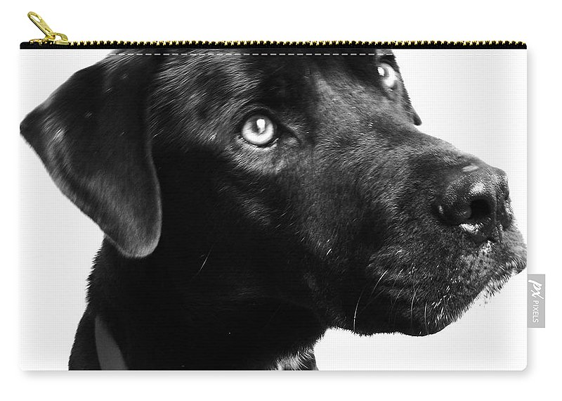 Dogs Carry-all Pouch featuring the photograph Dog by Amanda Barcon