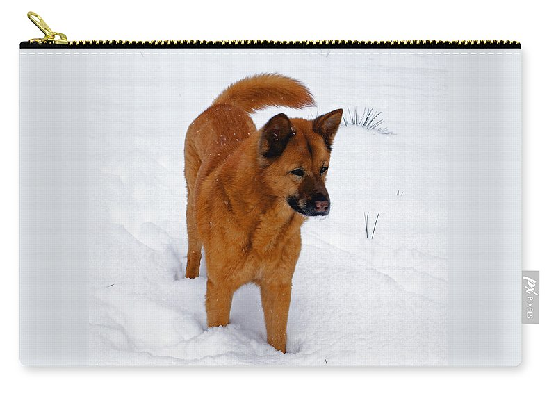 Snow Carry-all Pouch featuring the photograph Dog Days Of Winter by Jean Haynes