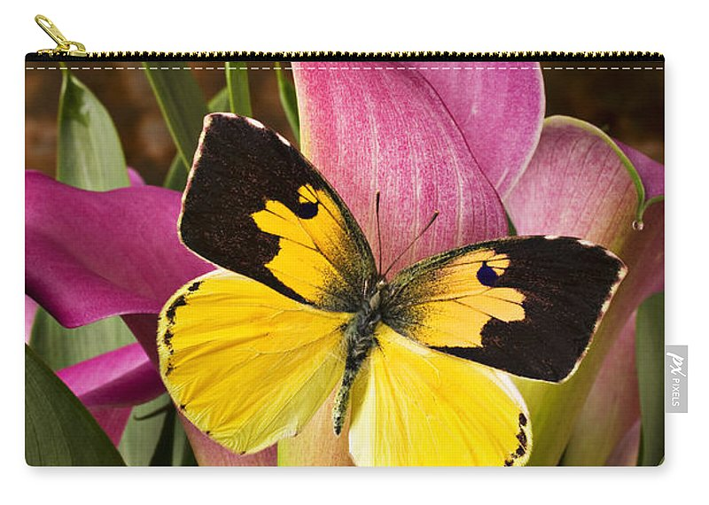 Butterfly Carry-all Pouch featuring the photograph Dogface Butterfly On Pink Calla Lily by Garry Gay