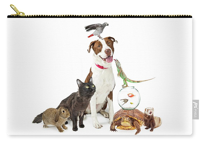 Animal Carry-all Pouch featuring the photograph Domestic Pets Group Together With Copy Space by Susan Schmitz
