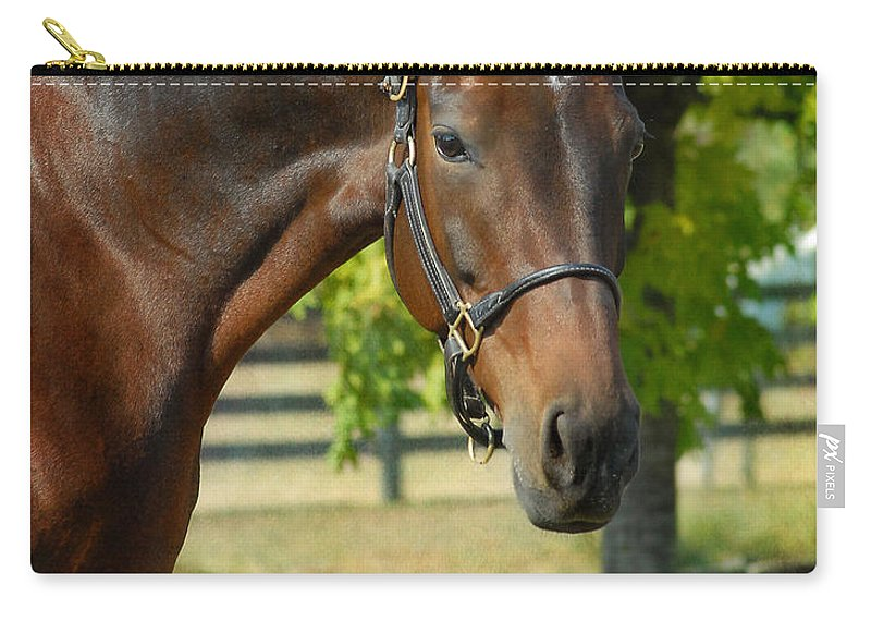 Warmblood Horses Carry-all Pouch featuring the photograph Donna Gina by Fran J Scott