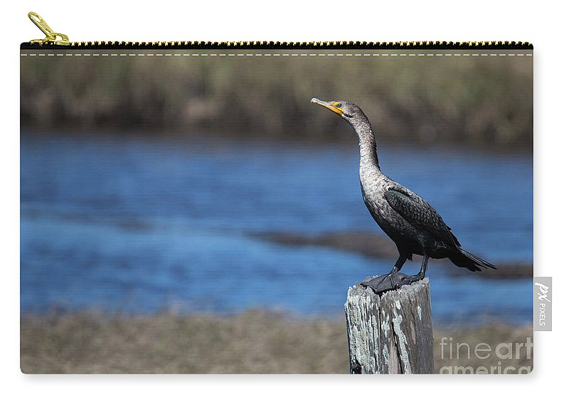 Double-crested Cormorant Carry-all Pouch featuring the photograph Double-crested Cormorant by Twenty Two North Photography