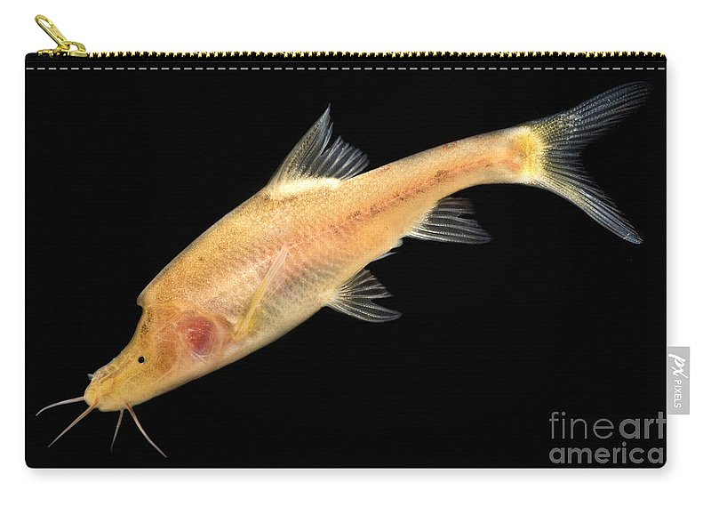 Double Horned Golden Line Barbel Carry-all Pouch featuring the photograph Double Horned Golden Line Barbel by Dant� Fenolio