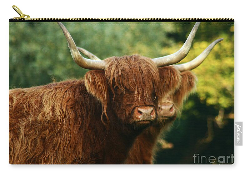 Cow Carry-all Pouch featuring the photograph Double Horny Portrait by Angel Ciesniarska