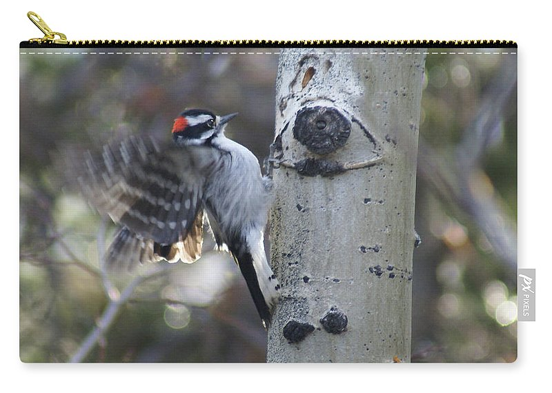 Woodpecker Carry-all Pouch featuring the photograph Downy Woodpecker by Heather Coen