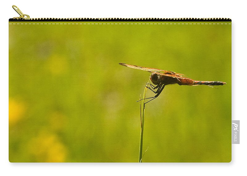 Snake Carry-all Pouch featuring the photograph Dragon Fly Poising by Douglas Barnett