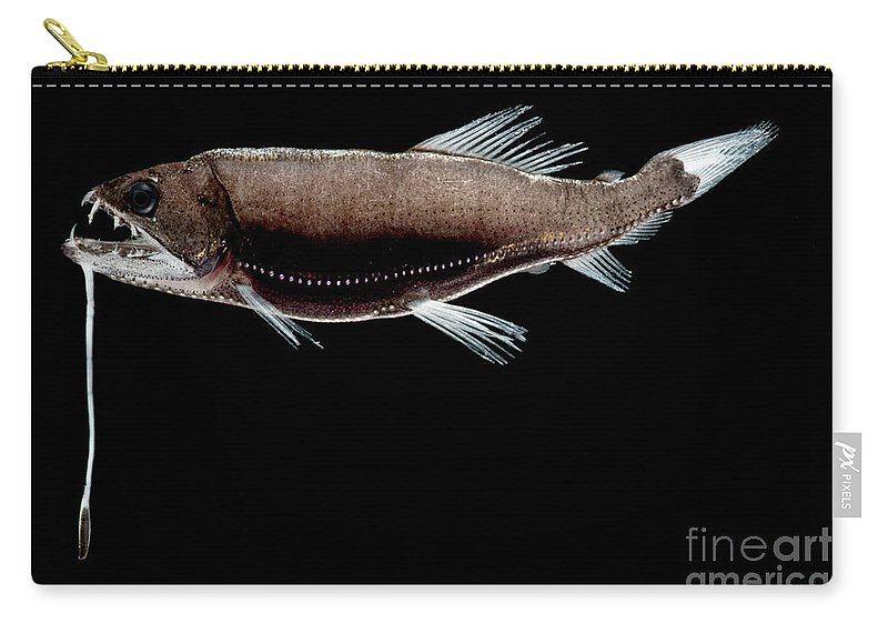 Dragonfish Carry-all Pouch featuring the photograph Dragonfish by Dant� Fenolio