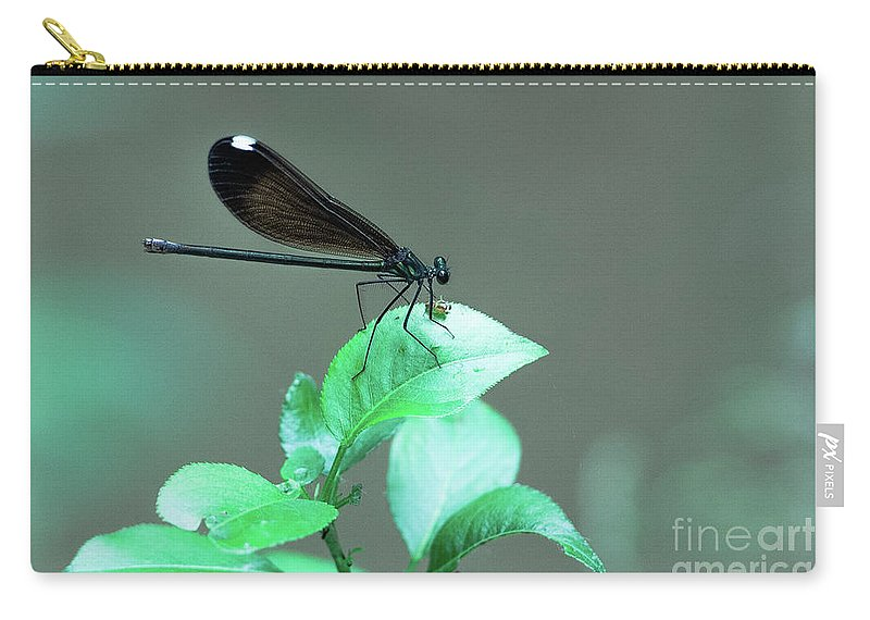 Dragonfly Carry-all Pouch featuring the photograph Dragonfly 1 by Wesley Farnsworth