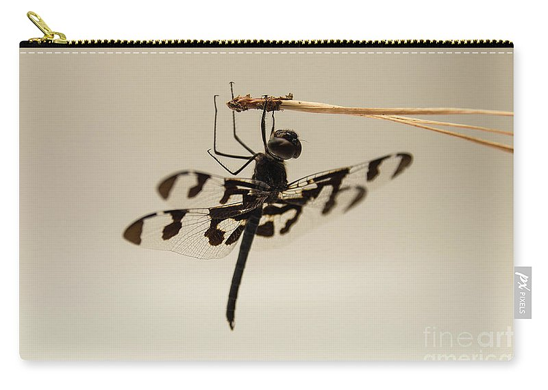 Background Carry-all Pouch featuring the photograph Dragonfly On A Pine Needle by Arturo Vazquez