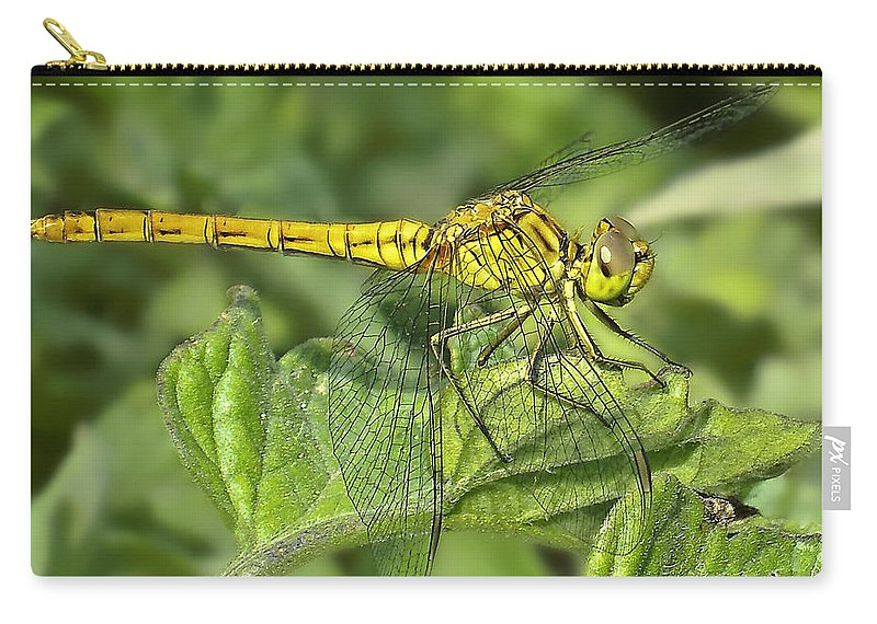 Dragon Carry-all Pouch featuring the photograph Dragonfly by Svetlana Sewell