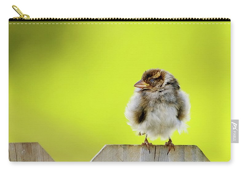 Sparrow Carry-all Pouch featuring the photograph Dream Sparrow by Betty LaRue