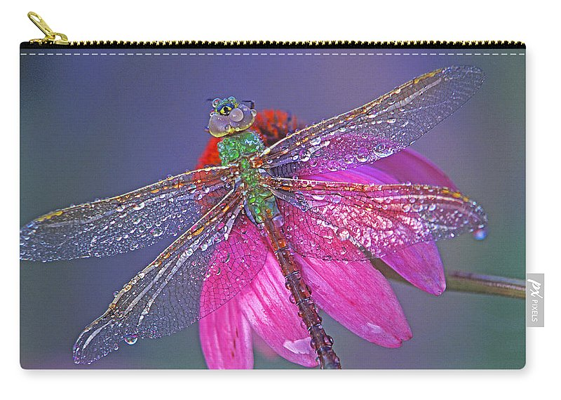 Dew Covered Dragonfly Rests On Purple Cone Flower Carry-all Pouch featuring the photograph Dreaming Dragon by Bill Morgenstern