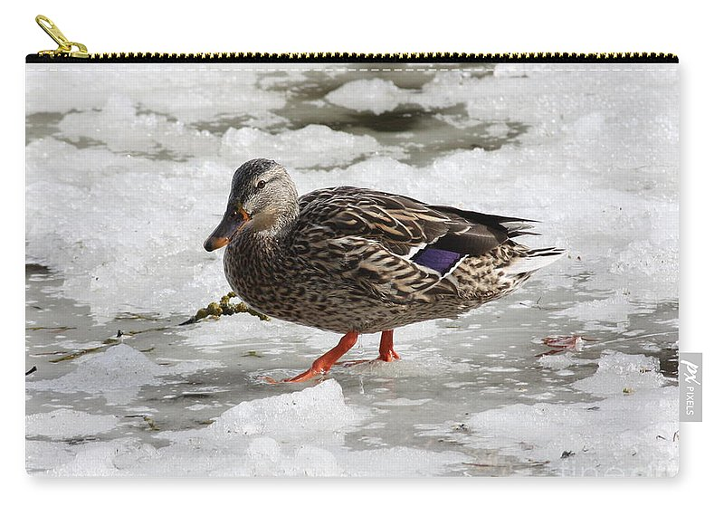 Duck Carry-all Pouch featuring the photograph Duck Walking On Thin Ice by Carol Groenen