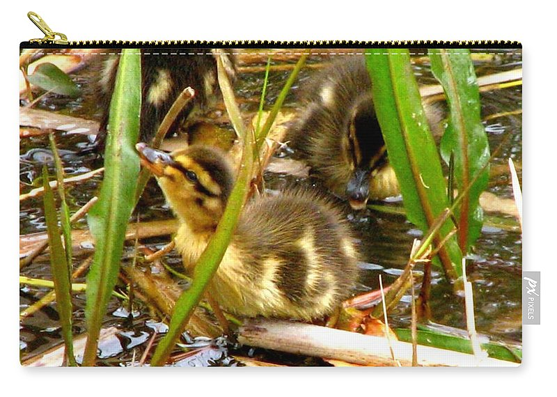 Duck Carry-all Pouch featuring the photograph Ducklings 1 by J M Farris Photography