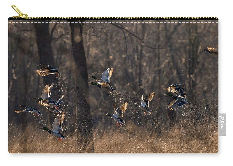 Ducks Carry-all Pouch featuring the photograph Ducks In Flight by Kevin Esterline