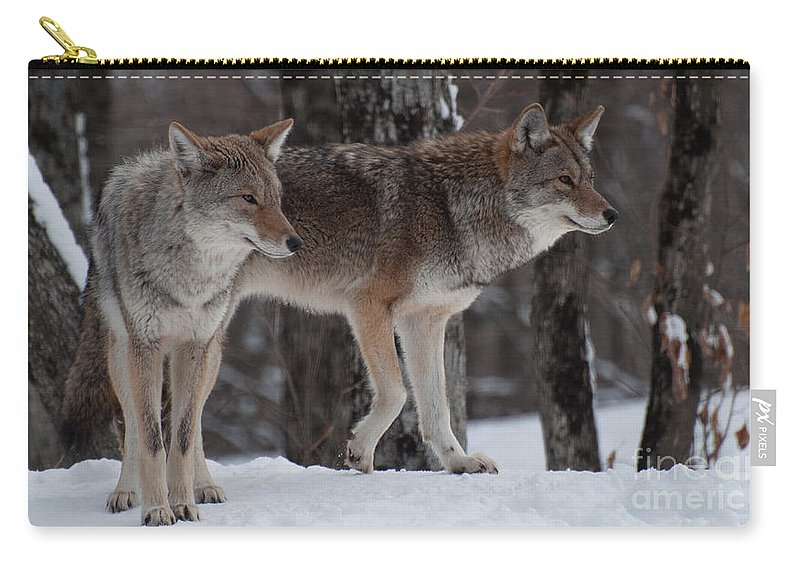 Coyote Carry-all Pouch featuring the photograph Dynamic Duo by Bianca Nadeau