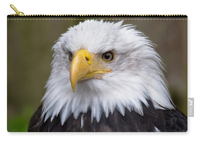 Eagle Carry-all Pouch featuring the photograph Eagle In Ketchikan Alaska by Michael Bessler
