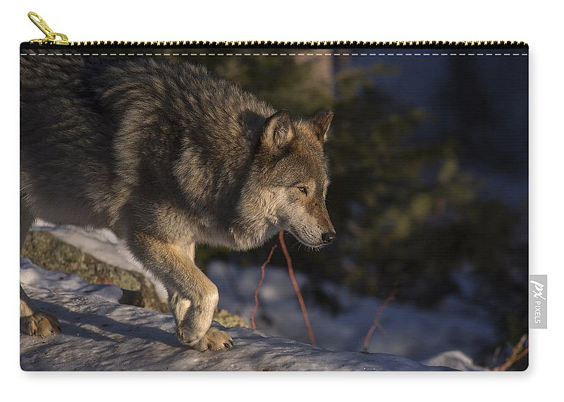 Wolf Carry-all Pouch featuring the photograph Early Light by Jeff Shumaker