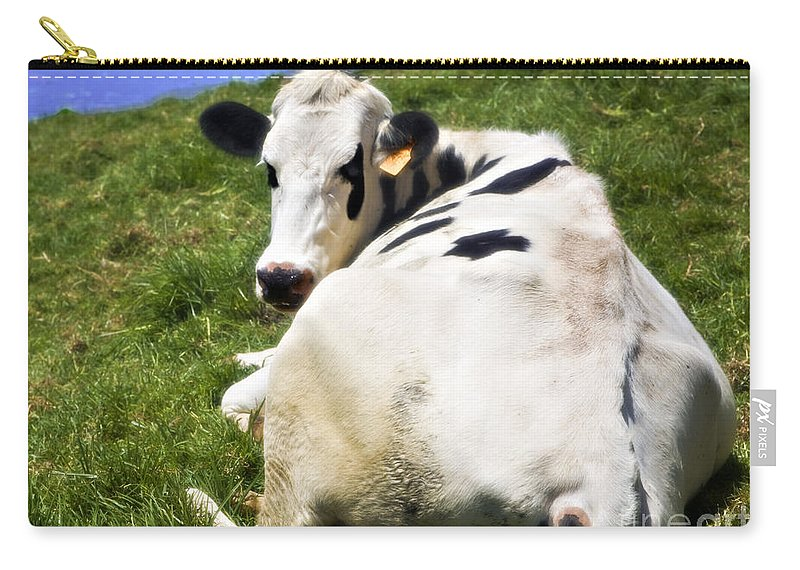 Cow Carry-all Pouch featuring the photograph Earmarked by Madeline Ellis