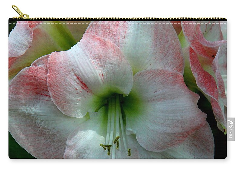 Amaryllis Carry-all Pouch featuring the photograph Easter Amaryllis by Barbara Bowen