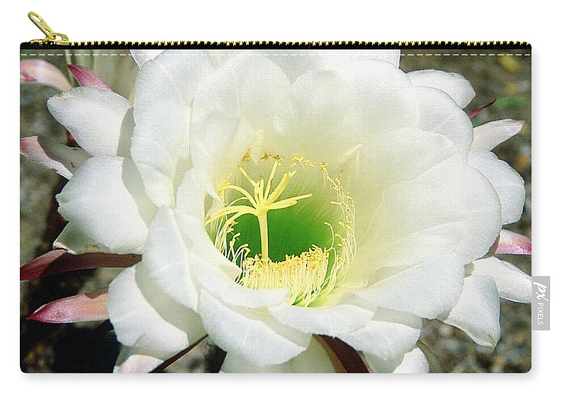 Wildflowers Carry-all Pouch featuring the photograph Easter Lily Cactus Flower by Kathy McClure