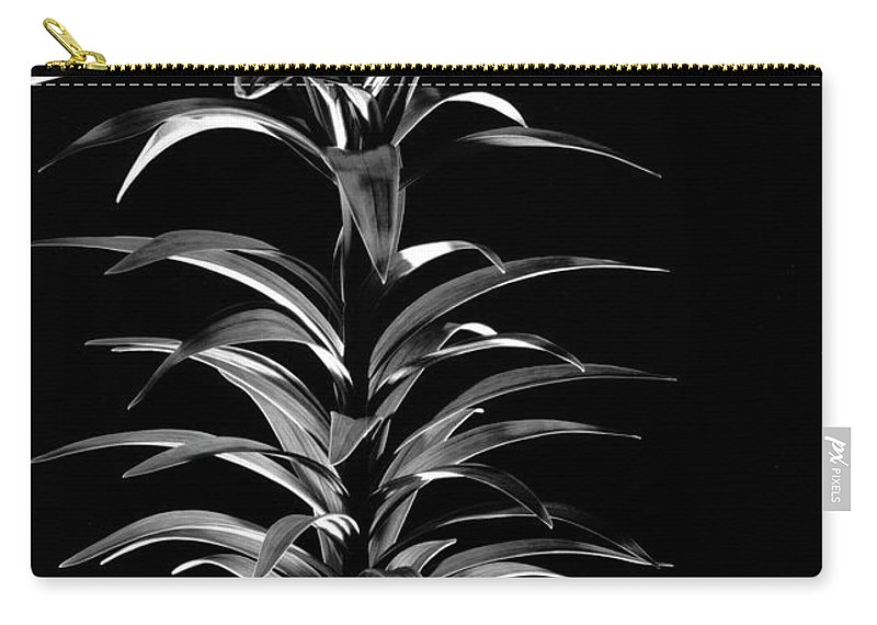 Easter Lily Carry-all Pouch featuring the photograph Easter Lily One by Frederic A Reinecke