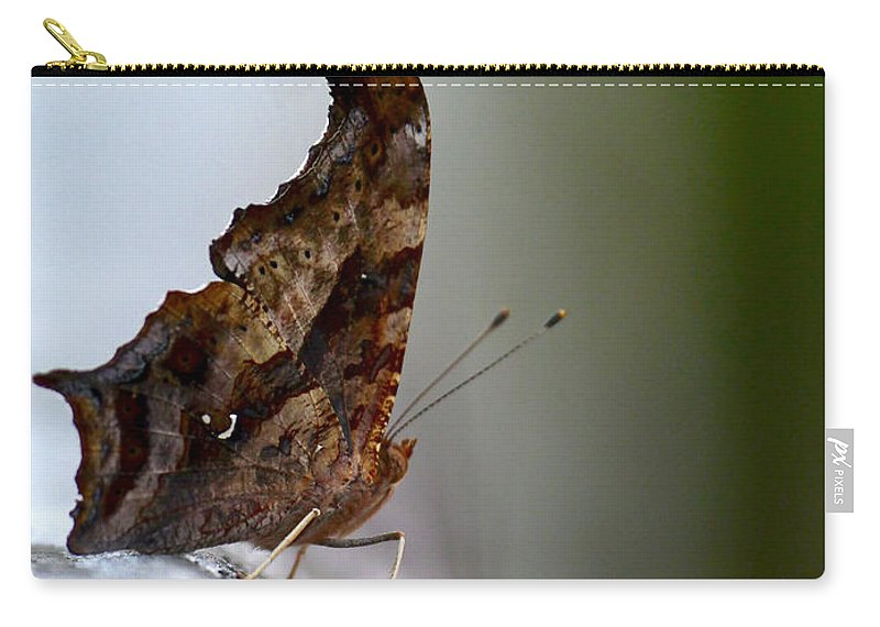 Butterfly Carry-all Pouch featuring the photograph Eastern Comma Butterfly by Rachel Morrison