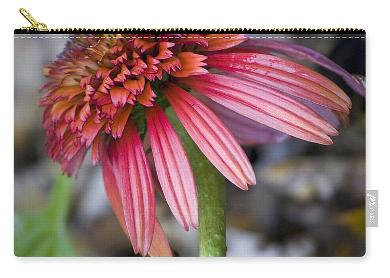 Coneflower Carry-all Pouch featuring the photograph Echinacea Hot Papaya by Teresa Mucha