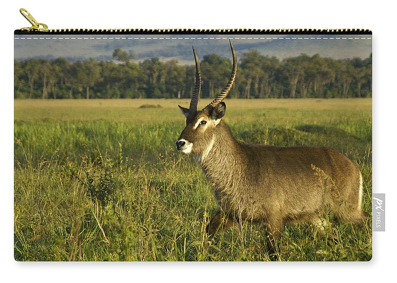 Africa Carry-all Pouch featuring the photograph Elegant Guy by Michele Burgess