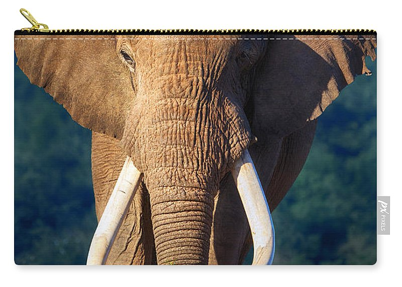 Elephant Carry-all Pouch featuring the photograph Elephant Approaching by Johan Swanepoel