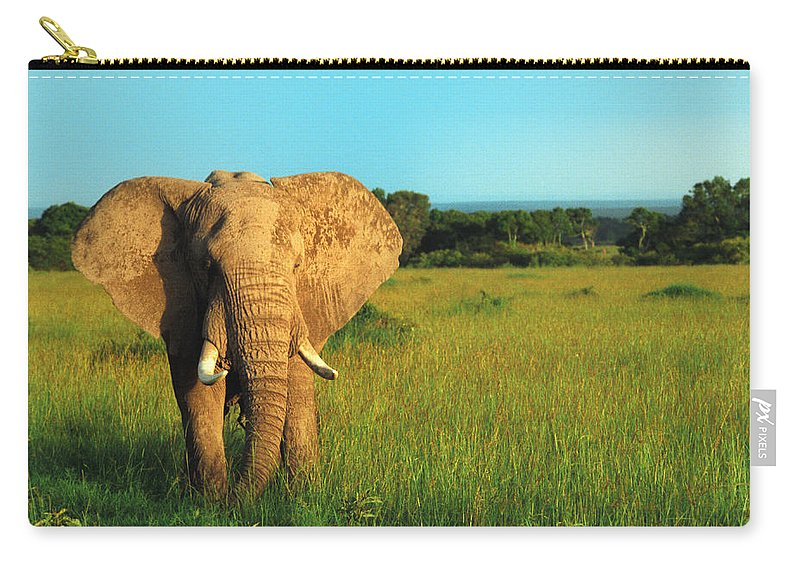 Africa Carry-all Pouch featuring the photograph Elephant by Sebastian Musial