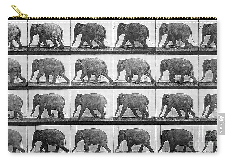 Muybridge Carry-all Pouch featuring the photograph Elephant Walking by Eadweard Muybridge