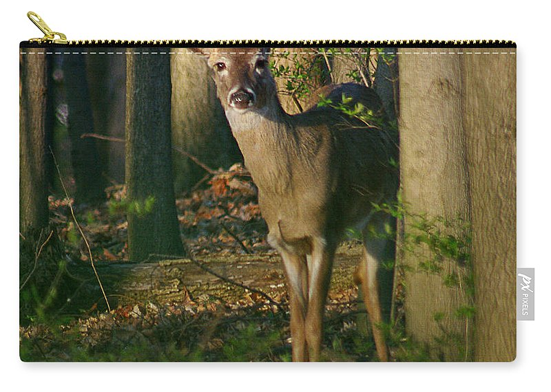 Deer Carry-all Pouch featuring the photograph Enchanted Forest by Jenny Gandert