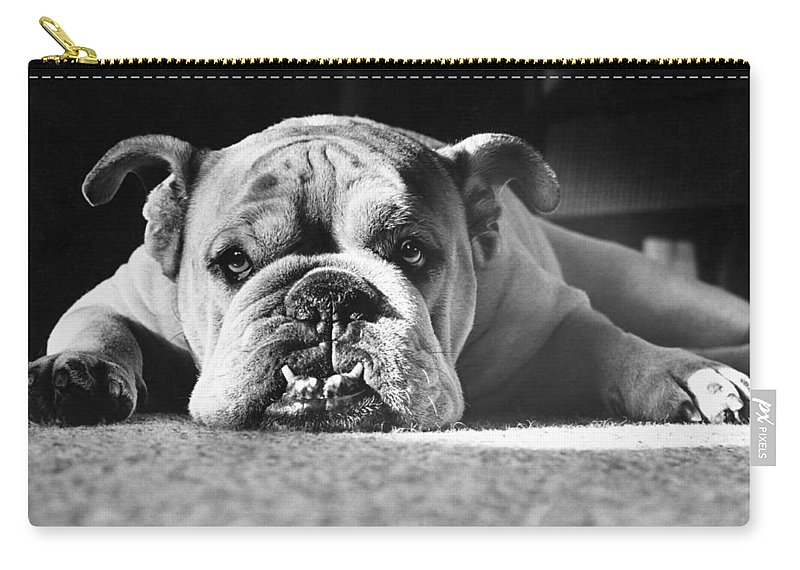 Animal Carry-all Pouch featuring the photograph English Bulldog by M E Browning and Photo Researchers