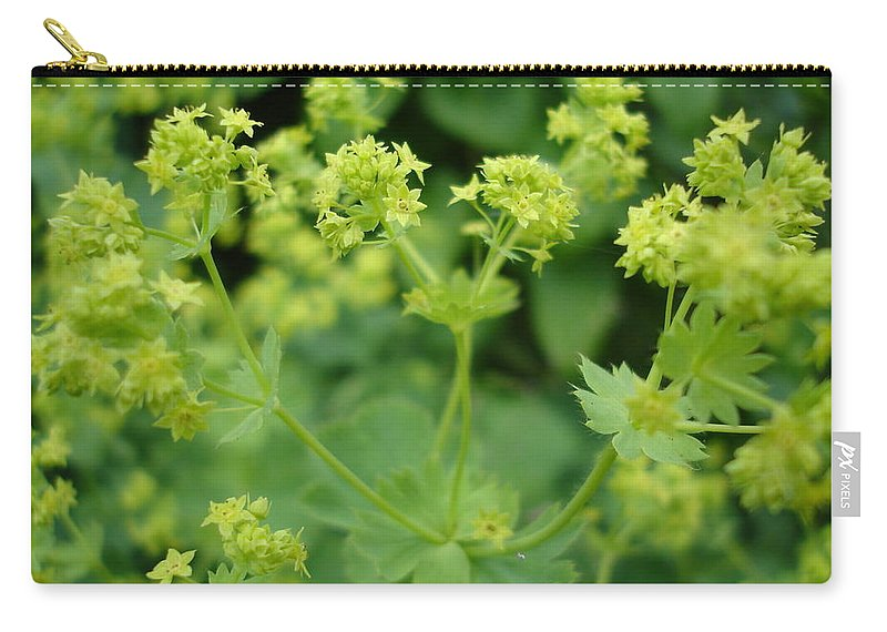 Plant Carry-all Pouch featuring the photograph English Ladys Mantle by Susan Baker